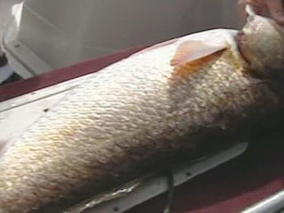 VIDEO: Fishermen Want to Fish