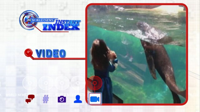 VIDEO: Instant Index: Little Girl, Sea Lion Have Game of Tag