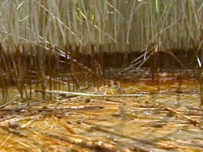 VIDEO: The Louisiana governor says there is a blanket of heavy oil in the marshlands.