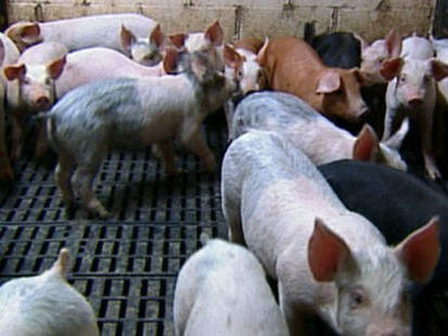 VIDEO: China Bans Pork Products