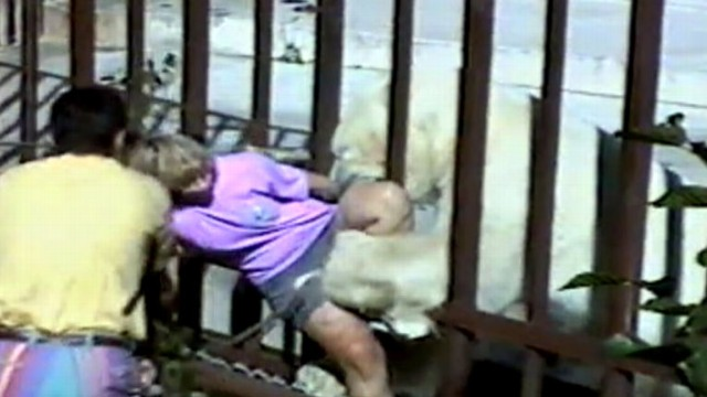 Scary animal attack pictures - photo#52