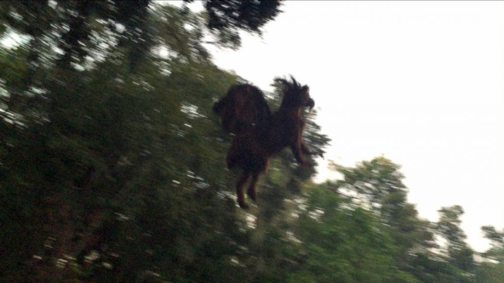The Jersey Devil Legend
